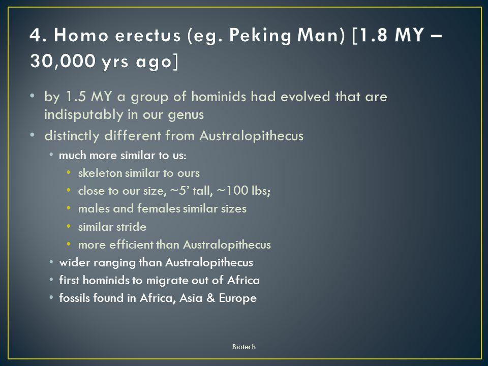4. Homo erectus (eg. Peking Man) [1.8 MY – 30,000 yrs ago]